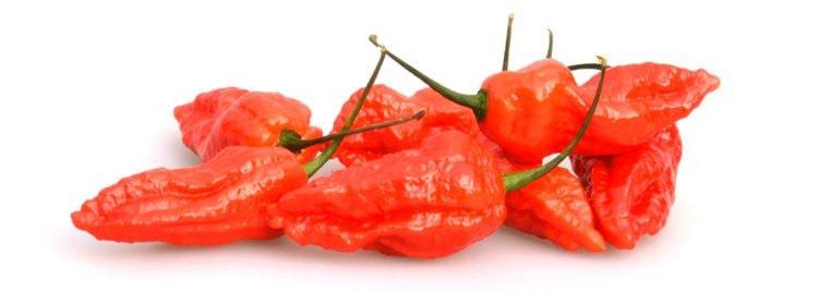 The hot pepper Bhut Jolokia