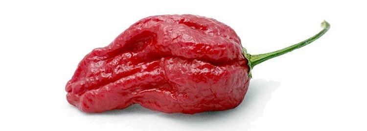The hot chili pepper Naga Morich